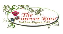 丹麦顶级玫瑰品种育苗商