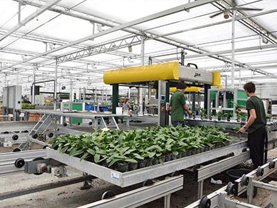 荷兰Logiqs温室物流系统
